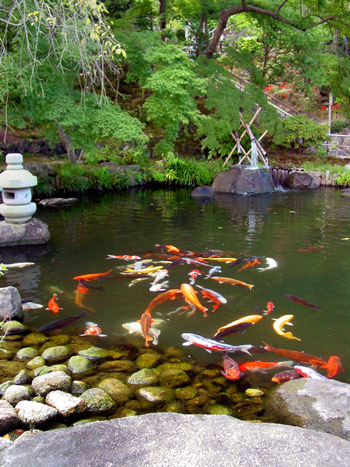 Most beautiful backyard gardens - Beautiful Ponds With Fish Www Imgarcade Com Online Image Arcade
